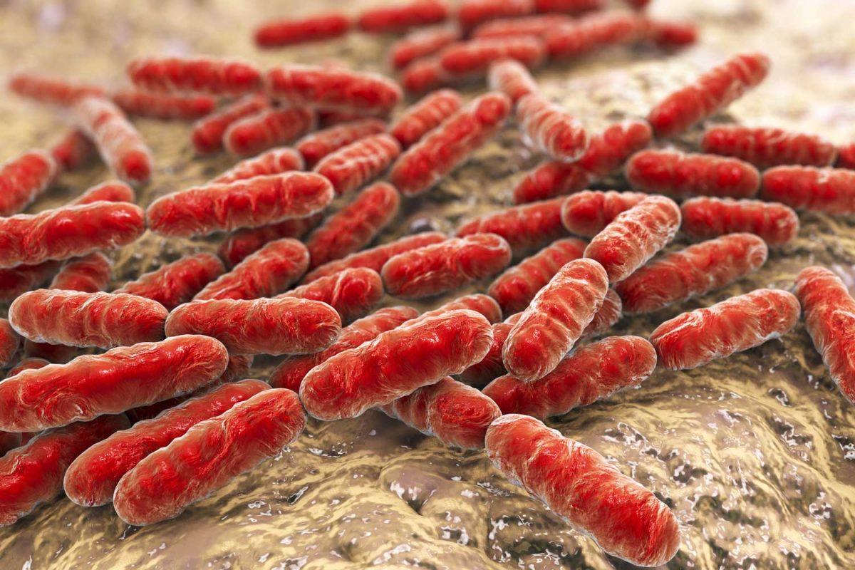 Днимка пробиотици и безплодие